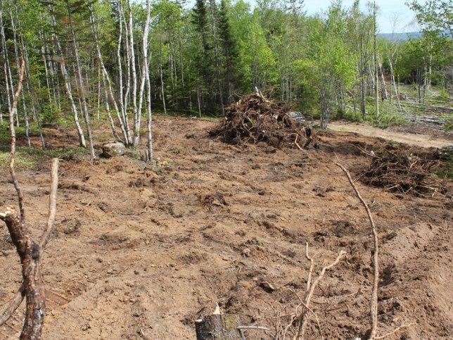 stumps-gone